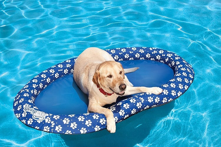 Pool Float for Your Pet